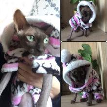 Teddy Jacket Hooded Sphynx Cat Sweatshirt / 4 Colors