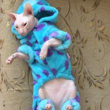 Warm winter popular cartoon-themed Sphynx Cat fleece / jacket / hoodie