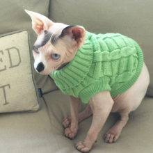 Angelic Sphynx Cat winter sweater in different colors