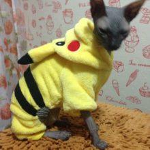 Cute Pikachu / Pokemon coat / Sphynx Cat hooded sweatshirt / costume