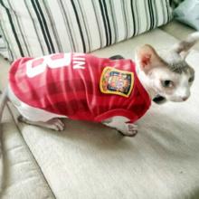 Super cute popular football teams Sphynx cat shirt