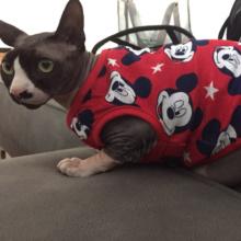 Cute, soft, cartoon-themed Sphynx Cat shirts