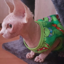 Cute, soft, cartoon-themed Sphynx Cat shirts