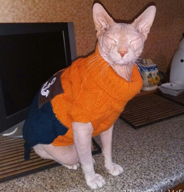 Collection Of Sphynx Cat Sweaters Best Fashion Trends And Models