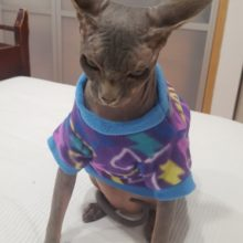 Graffiti Style Sphynx Cat Shirt / 3 Colors